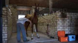 Праздники и будни конного спорта