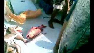 Egypt Game fishing aug 2009 Wahoo