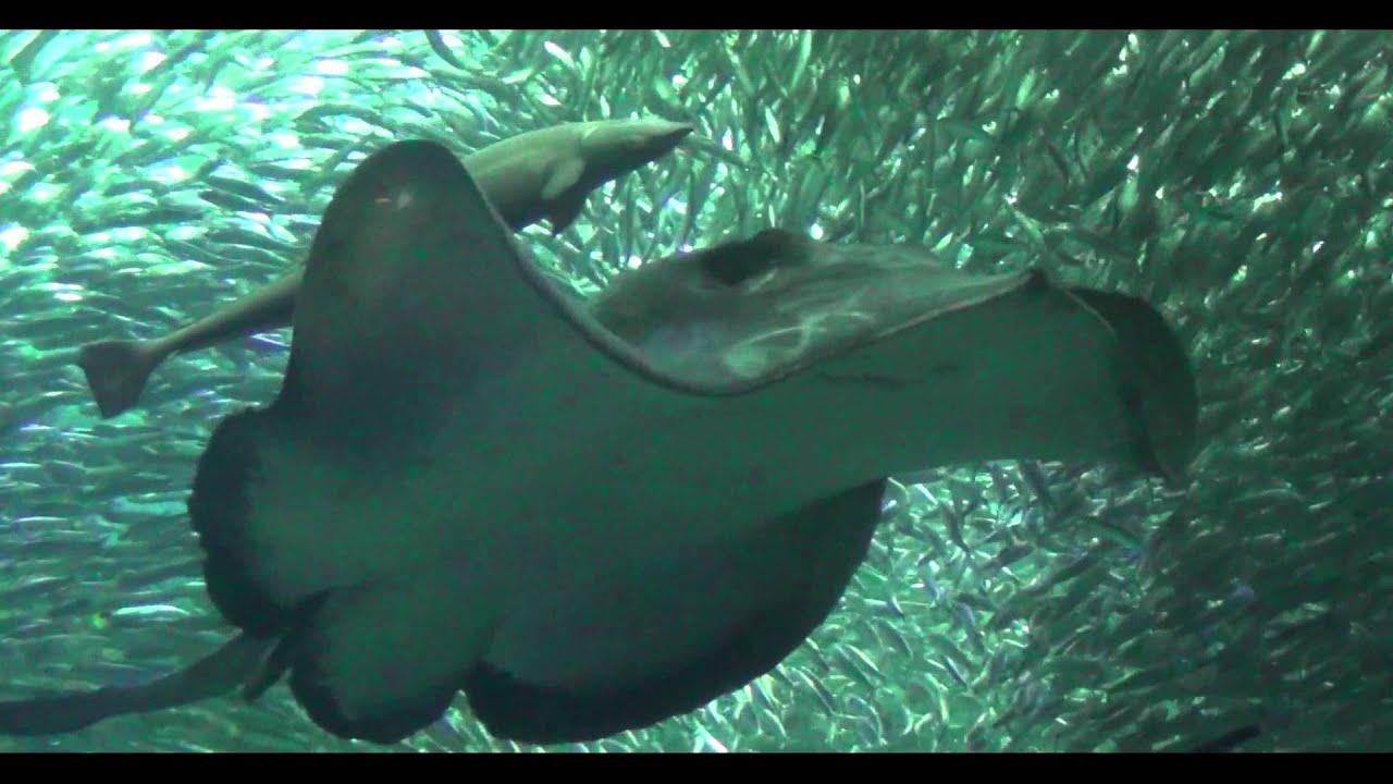 冷たい熱帯魚|動画フルを無料視聴!Dailymotion …