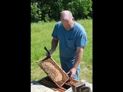 The Neonicotinoid View: Review of New EPA Guidelines For Bee Incidents