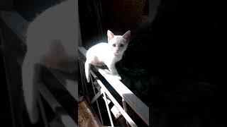 Белый котенок похожий на альбиноса