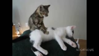 Приколы про котов от Маши Прикольная озвучка котов