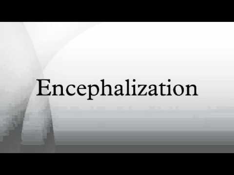 Encephalization