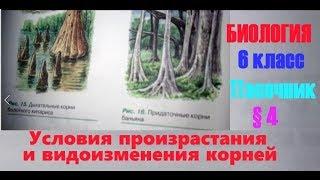 Биология 6 класс § 4 (Автор: Пасечник В.В.) Условия произрастания и видоизменения корней
