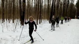 Фрагмент урока по лыжной подготовке