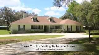 Bella Luna Farm The Perfect Mini Farm For Sale Ocala Florida
