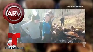 Cazadores disparan a activistas en Francia | Al Rojo Vivo | Telemundo