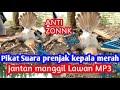Suara Pikat Prenjak Kepala Merah Jantan Gacor Panggil Lawan Super Ampuh  Mp3 - Mp4 Download