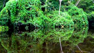 Jungle Mirror, Peruvian Amazon