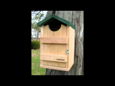 Finches Bird House/Nest - YouTube