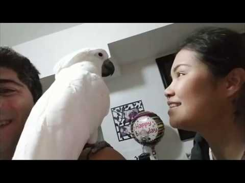 Always Mommy bringing happiness to home♥️♥️♥️Cute umbrella cockatoo