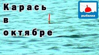 Платная рыбалка в Подмосковье. Рыбалка Никитское в ...