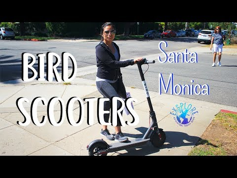 Bird Scooter Santa Monica: New Transportation Startup/App in LA