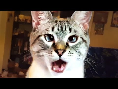 THE BEST CUTE AND FUNNY CAT VIDEOS OF 2019! ?