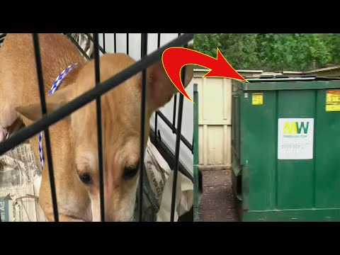 A Young Woman Found A Crate Next To The Dumpster, What She Found Inside Left Her In Tears..