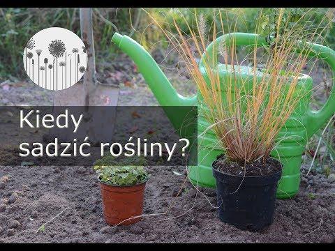 Do kiedy sadzić rośliny w ogrodzie? Terminy sadzenia roślin