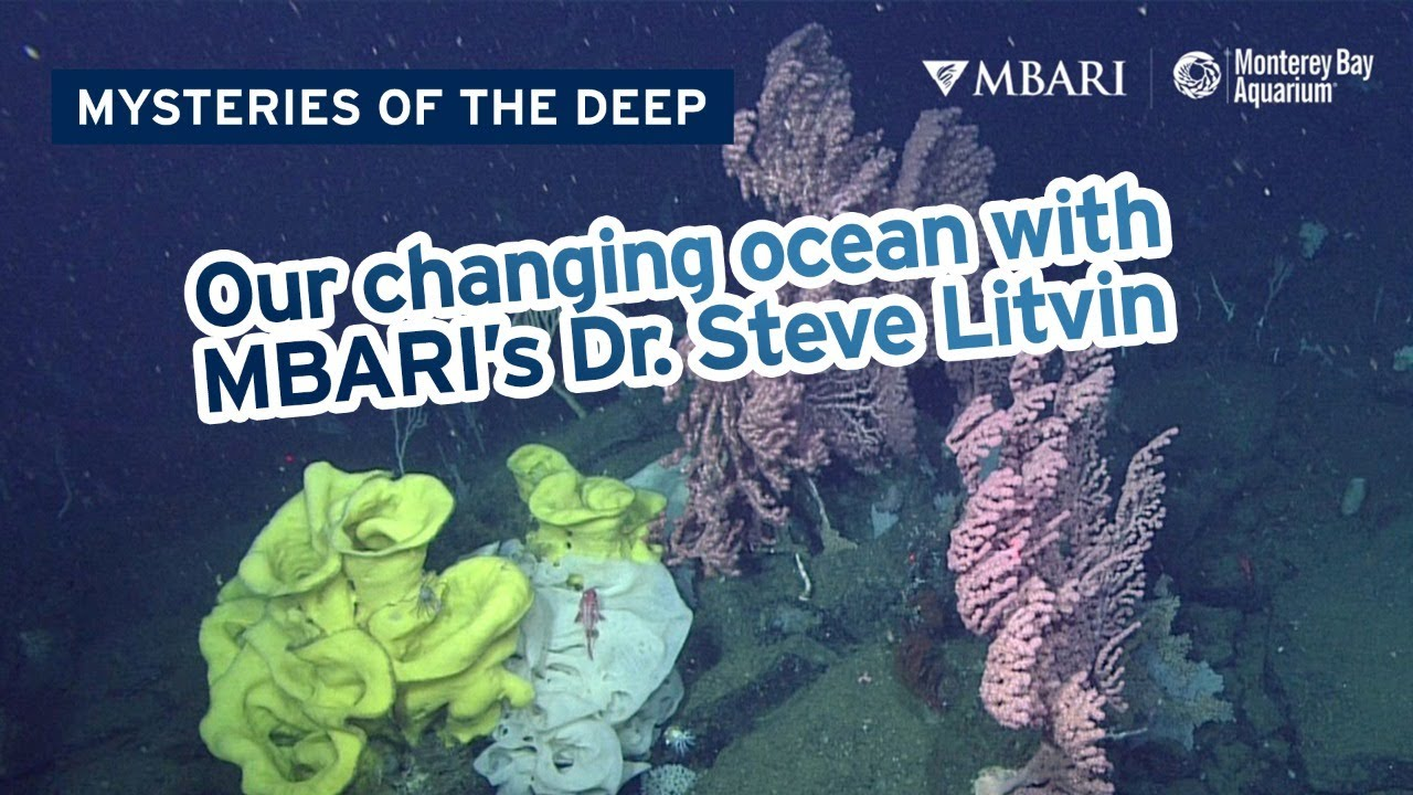 Mysteries of the Deep with MBARI's Dr. Steve Litvin — The Science Of Our Changing Ocean