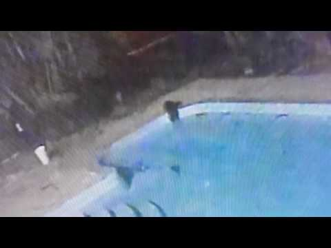 Cat jump to the swimming pool