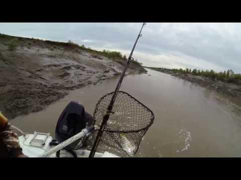 Barra Fishing Around Wyndham W.A. Runoff Action Caught In HD On Gopro