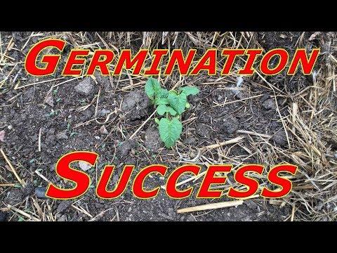 We Have Germination… #145 Heirloom Organic Vegetable Garden