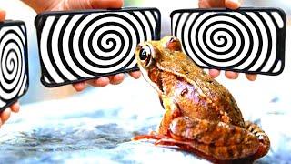 Как Загипнотизировать Разных Животных