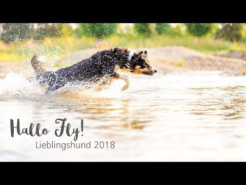 Wassershooting mit Hund