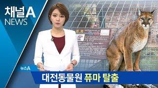 대전동물원서 퓨마 탈출, 헬기 수색 끝 발견했지만… | 뉴스A