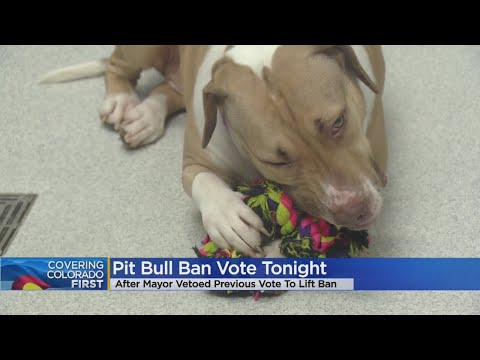 Denver City Council To Vote On Pit Bull Ban Repeal After Mayor's Veto