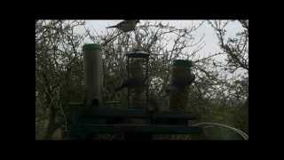 Busy Bird Table On A Cold Day.