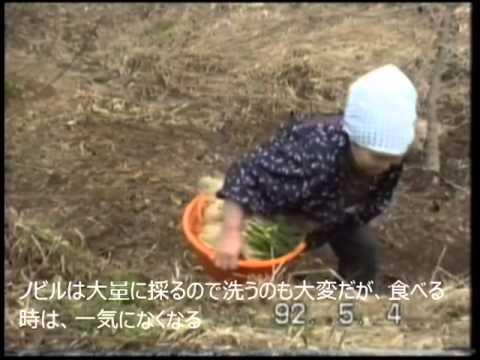 春の山菜 (のびる カタクリ ぜんまい)