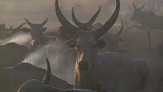 Sud Soudan : dans l'ombre du conflit, la guerre du bétail I AFP Reportage