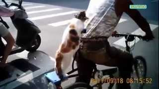 Приколы про котов и собак, безумные выходки. Funny cats and dogs.