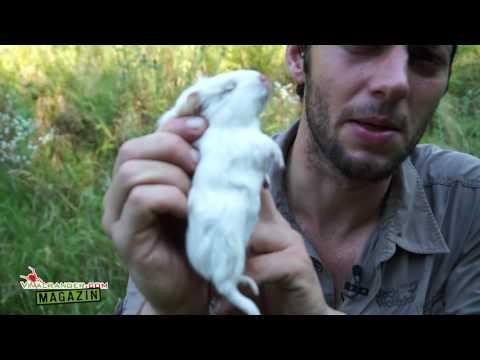 Snippet: Killzone - Wie Du ein Säugetiers richtig tötest VRMag #2 (Doku):