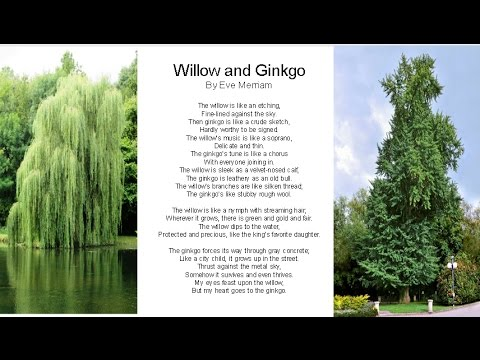 Willow And Ginkgo Poem