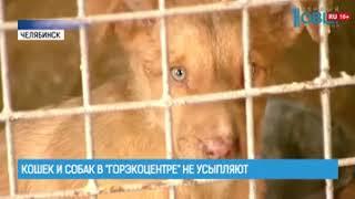 """Кошек и собак в """"ГорЭкоЦентре"""" не усыпляют"""