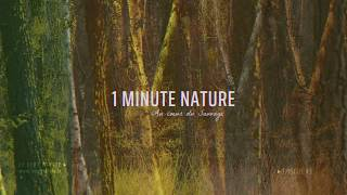 Le Cerf Pirate - 1 MINUTE NATURE - EP 03