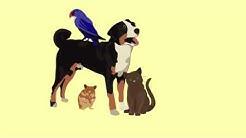 hqdefault - Can Getting A Dog Help Depression