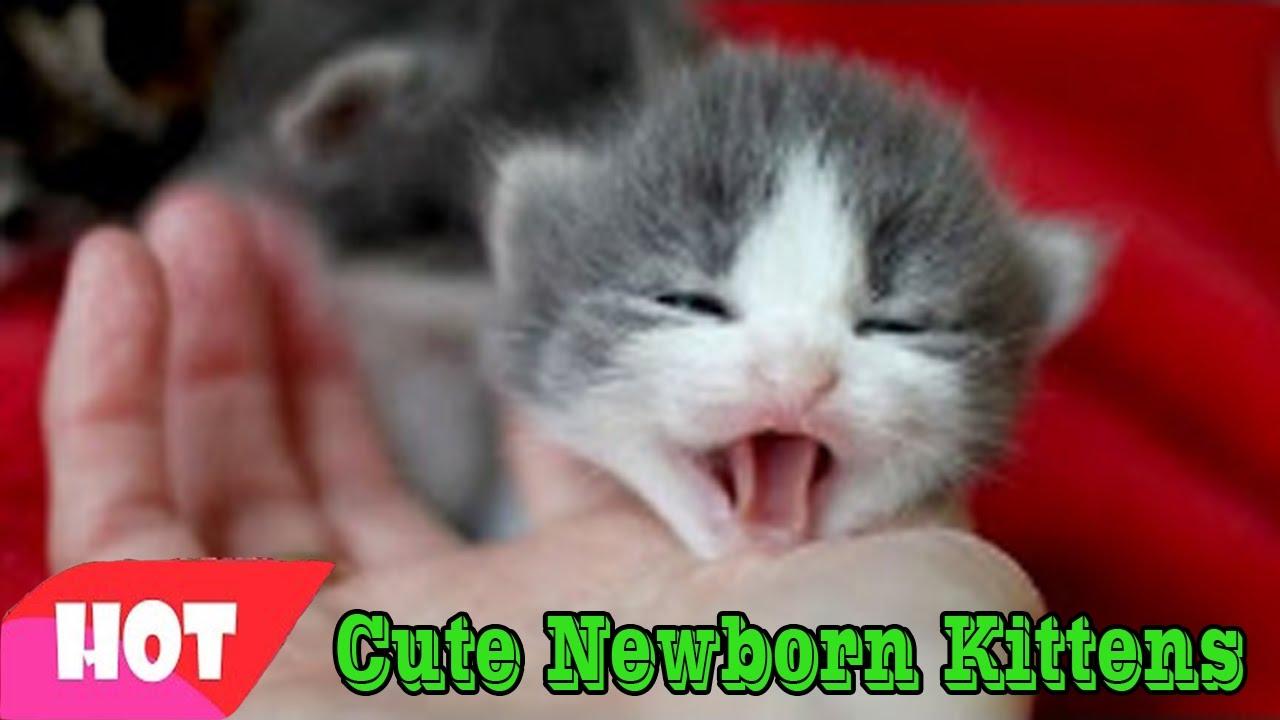Newborn kittens Newborn kittens cry when mom is away