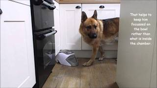 Introducing Archie to the Treat and Train Remote Reward Dog Trainer (Manners Minder)