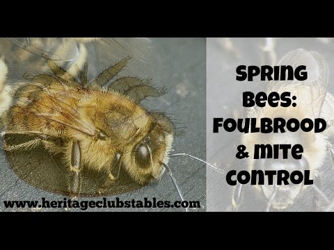 "Spring Bee: ""Foulbrood and Mite Control"""