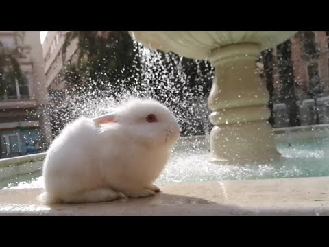 ASMR Conejito Escuchando El Sonido Del Agua De La Fuente ⛲🐰 Sound Water, Cute Bunny.