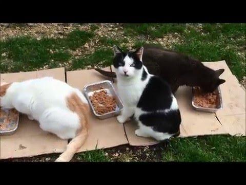 La vie au refuge du chat libre Marseille