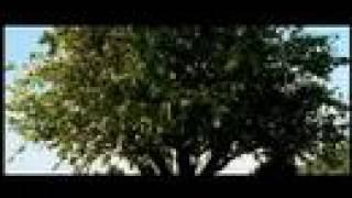 Adams æbler -- Las  manzanas de Adán --  (2005)