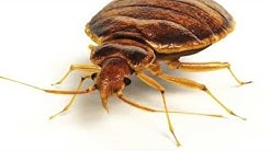 Bed Bugs In Atlanta GA and Surrounding Areas