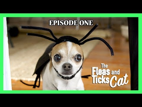 The Fleas and Ticks Cat -  Nic and Pancho Web Series Ep#1