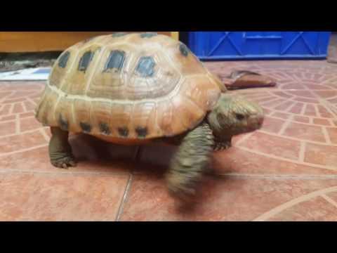 Friendy Tortoise