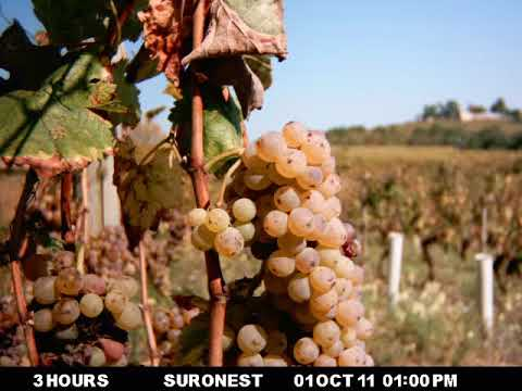 wine article Video time lapse of Verasion during Maturation