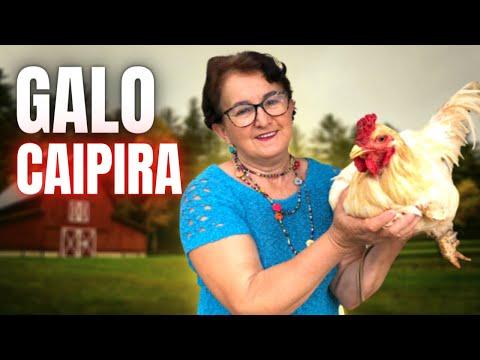 MATANDO GALO CAIPIRA PARA FAZER UMA GALINHADA! COMO ABATER UM GALO CAIPIRA? LIMPANDO GALO CAIPIRA!