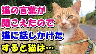 【猫の不思議な話】猫の言葉が聞こえたので俺は猫に話しかけた、すると猫は…。