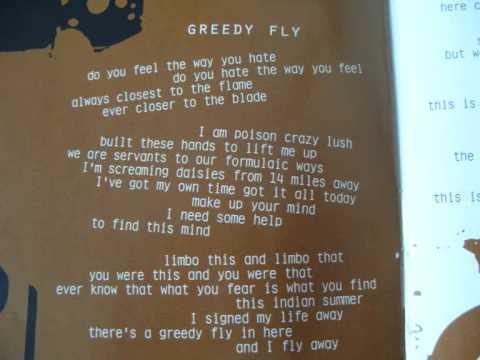 Bush - Greedy Fly